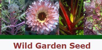 wild seeds